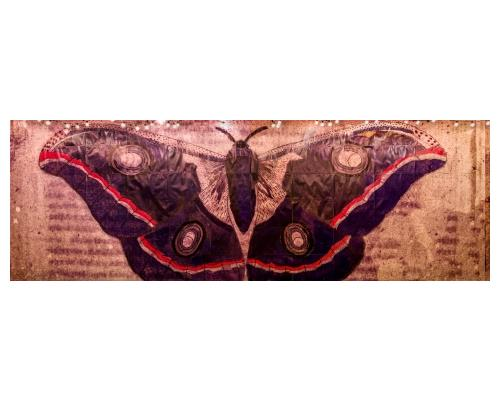 ss_fine-art-butterfly-painting-siegel
